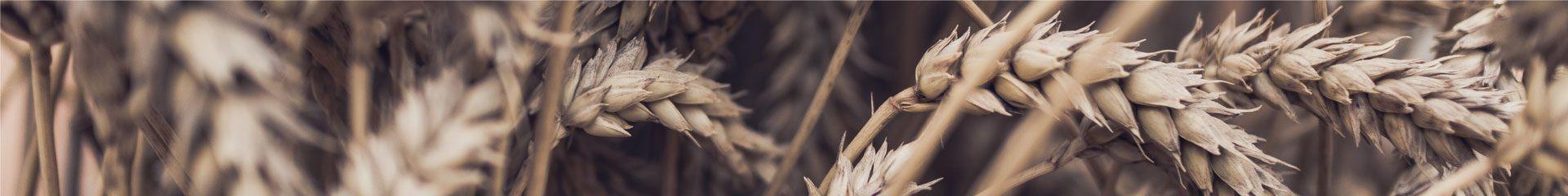 Wheat Bran Series