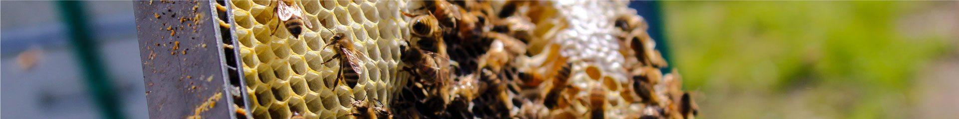 Natural Honey Series